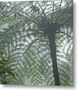 Cloud Forest Ceiling, Costa Rica Metal Print