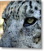 Clouded Leopard Face Metal Print