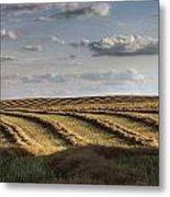 Clouds Over Canola Field On Farm Metal Print