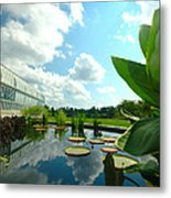 Cloudy Reflections And Lily Pad Companions  Metal Print