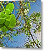 Clover And Sunflare 1 Metal Print by Amber Flowers
