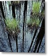 Clumps Of Grass In Water Reflecting Metal Print