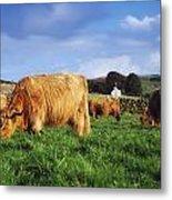 Co Antrim, Ireland Highland Cattle Metal Print
