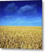 Co Louth,irelandwheat Field Metal Print