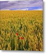 Co Waterford, Ireland Poppies In A Metal Print