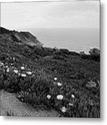 Coastal View Mist - Black And White Metal Print