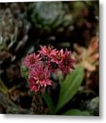 Cobweb Hen And Chicks 2 Metal Print