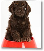 Cocker Spaniel Pup In Doggy Dish Metal Print