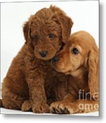 Cocker Spaniel Puppy And Goldendoodle Metal Print