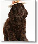 Cocker Spaniel Wearing A Hat Metal Print