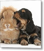 Cockerpoo Pup And Lionhead-lop Rabbit Metal Print