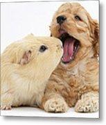 Cockerpoo Puppy And Guinea Pig Metal Print