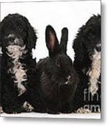 Cockerpoo Pups And Rabbit Metal Print