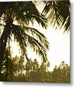 Coconut Palm Trees On The Coast Metal Print