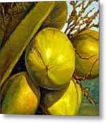 Coconuts Series One Metal Print by Jose Romero