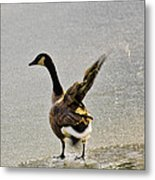 Cold Goose Bath Metal Print