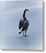 Cold Goose Dreams Metal Print