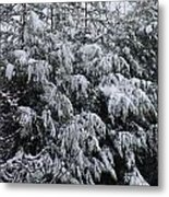 Cold Winter Snow Metal Print