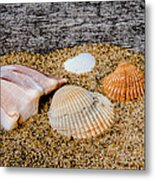 Collection Of Shells Metal Print