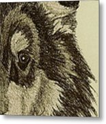 Collie Metal Print