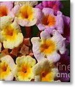 Color Explosion Flowers Metal Print