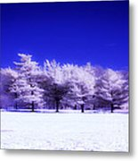 Color Infrared Winter Trees Metal Print