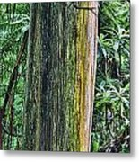 Color Of The Trees Metal Print