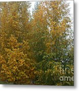 Color Rich Metal Print