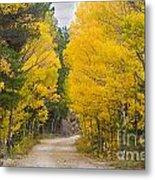 Colorado Autumn Aspen Road Boulder County Metal Print