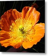 Colorado Flower Metal Print