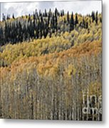 Colorado Gold II Metal Print