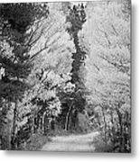 Colorado Rocky Mountain Aspen Road Portrait Bw Metal Print