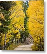 Colorado Rocky Mountain Aspen Road Portrait  Metal Print
