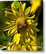 Colorado Sunflower And Visitor Metal Print