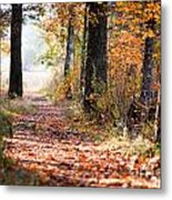 Colorful Autumn Landscape Metal Print