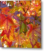 Colorful Autumn Leaves Art Prints Trees Metal Print