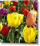 Colorful Bright Tulip Flowers Field Tulips Floral Art Prints Metal Print