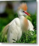 Colorful Cattle Egret Metal Print