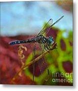 Colorful Dragon Fly Metal Print