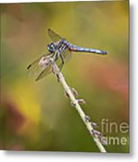 Colorful Dragonfly Dream Metal Print