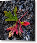 Colorful Fallen Leaf Metal Print