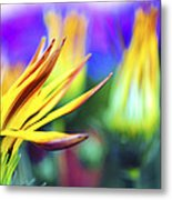 Colorful Flowers Metal Print