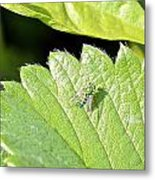 Colorful Garden Fly 2 Metal Print