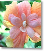 Colorful Hibiscus Metal Print by Karen Nicholson