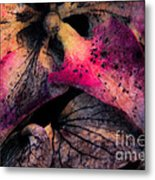 Colorful Hydrangea Abstract. Metal Print