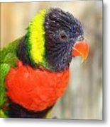 Colorful Lorikeet Parrot Metal Print
