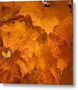 Colorful Maple Leaves In Fall Metal Print