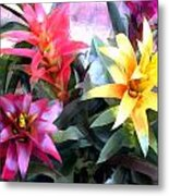 Colorful Mixed Bromeliads Metal Print