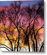 Colorful Silhouetted Trees 26 Metal Print