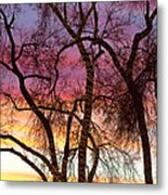 Colorful Silhouetted Trees 37 Metal Print